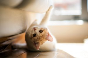 120571__torode-cat-game_p