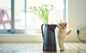 184126__adorable-cat_p