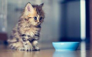 130093__kitten-toe-eye-ben-torode_p