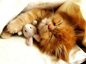 cats-cat-cute-hugging-sleeping-toy-world-collection-371051